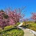 福壽山農場D810 050.JPG