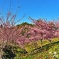 福壽山農場D810 049.JPG