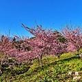 福壽山農場D810 051.JPG