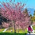 福壽山農場D810 053.JPG