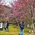 武陵農場0304D810 036.JPG
