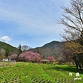 武陵農場0304D810 043.JPG