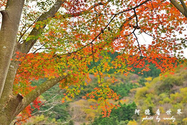 琴平-高松D810 048.JPG
