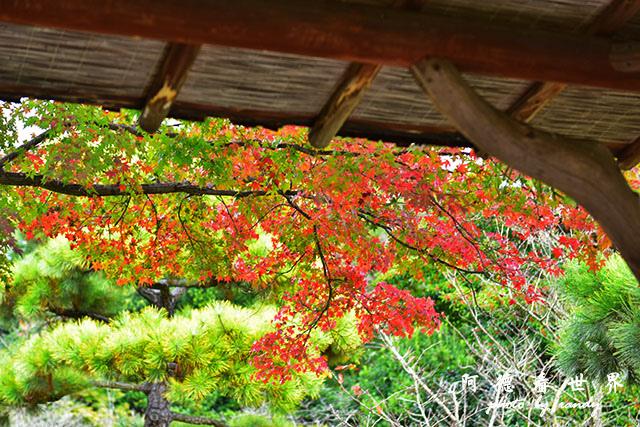 栗林公園-德島D810 069.JPG