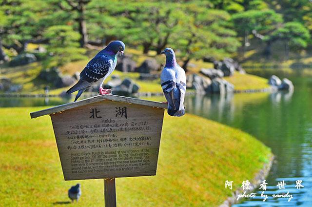 栗林公園-德島D7000 027.JPG