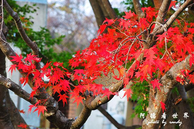 栗林公園-德島P7700 160.JPG
