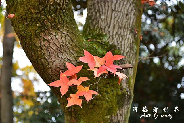 岡山-廣島D810 131.JPG