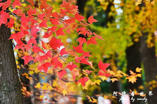 岡山-廣島D7000 064.JPG