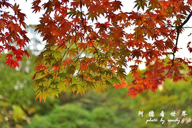 岡山-廣島D810 254.JPG