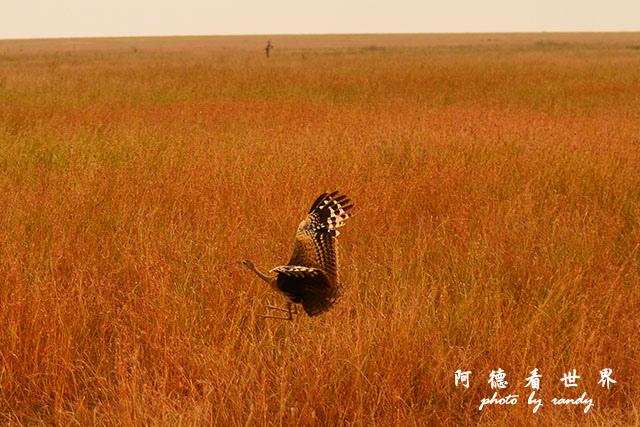 serengeti1D7000 217.JPG