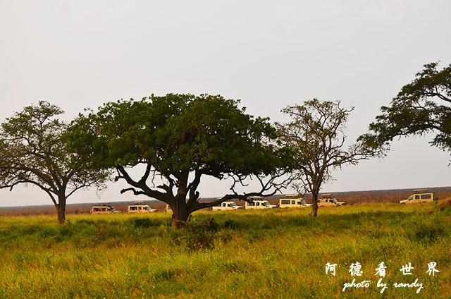 serengeti1D7000 220.JPG