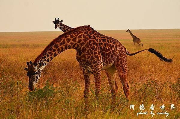 serengeti1D7000 230.JPG