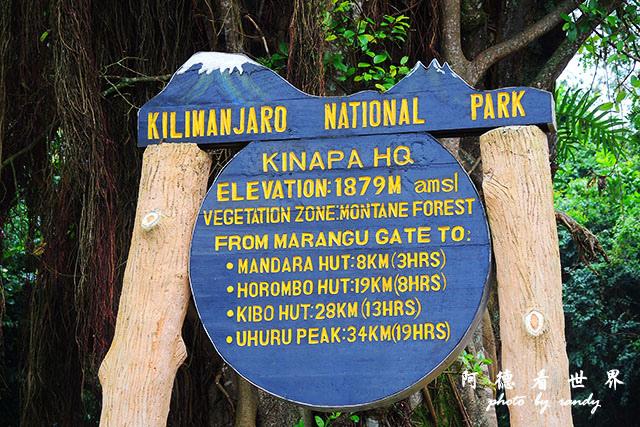 kilimanjaroP7700 021.JPG