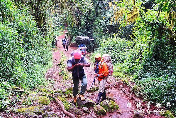 kilimanjaroP7700 066.JPG
