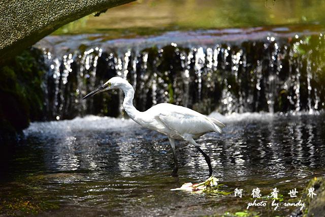 前山公園0405 085.JPG
