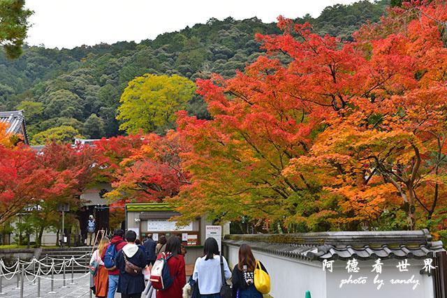 京都2D810 031.JPG