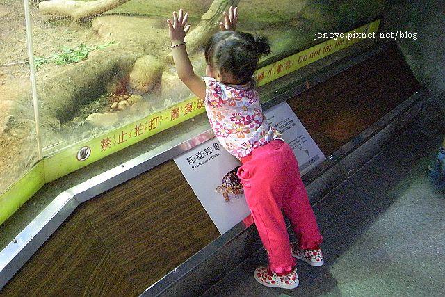 動物園991017