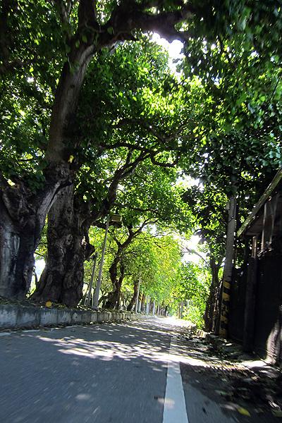 卑南綠色隧道