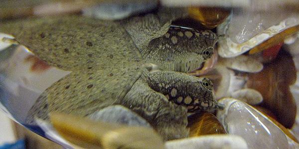 牠是隻鱉-2