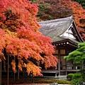 Couleurs de l'automne - (Itoshima).jpg