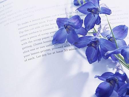 紫羅蘭-永恆的美麗
