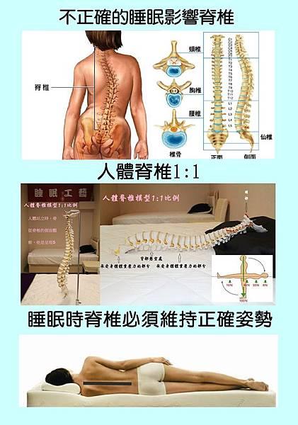 睡眠工藝-睡眠與脊椎2