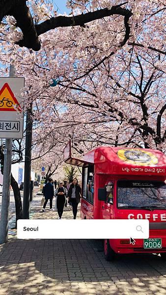 韓國首爾|賞櫻必去!汝矣島櫻花節,國會議事堂站1.7km櫻花隧道賞櫻美翻
