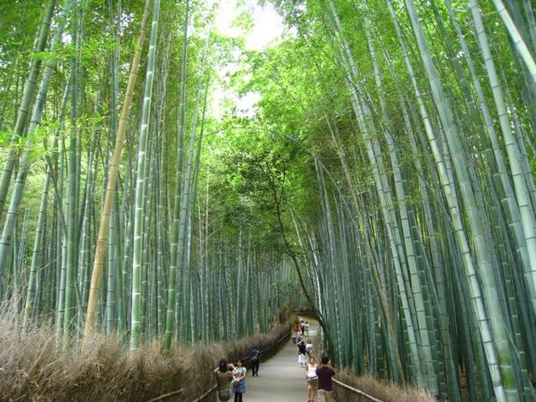 我最愛的竹林
