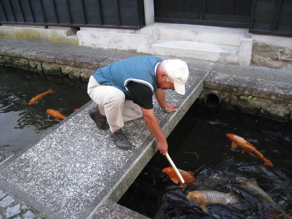 日本好友買仙貝來餵魚