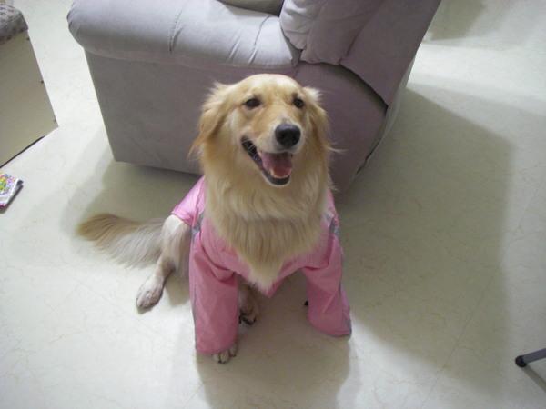 新雨衣穿起來像和服