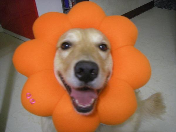 你是我的花朵