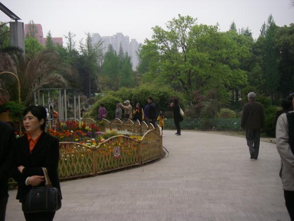 上海植物園造景