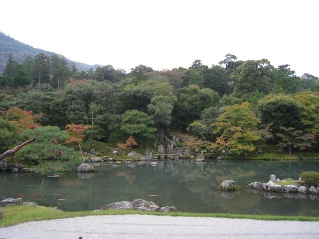 庭院的風景