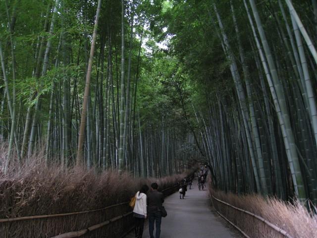 我就是要看這片竹林