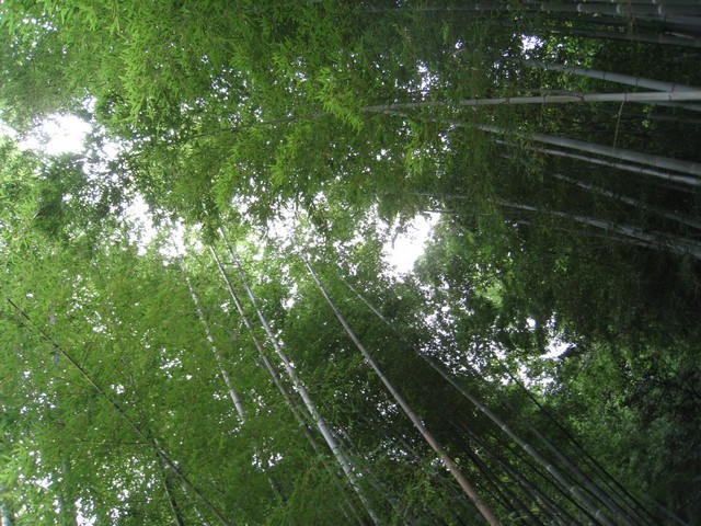 好美的竹林