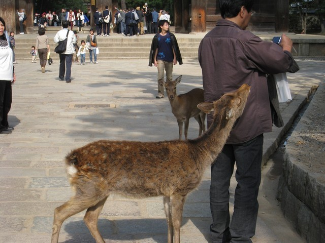 小心!鹿就在你身邊