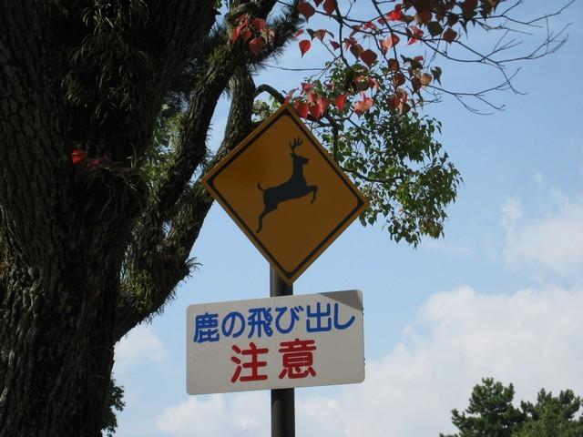 小心!鹿飛出來