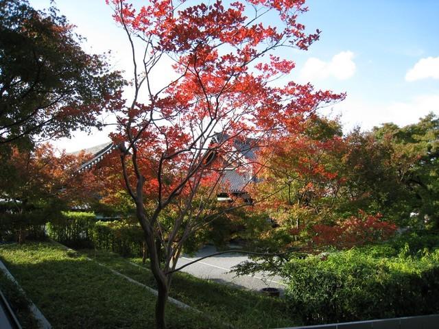 紅色的楓樹