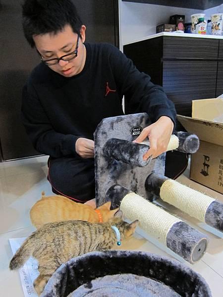 寵愛物語馬戲團貓咪跳台 愛貓園購入 (20)