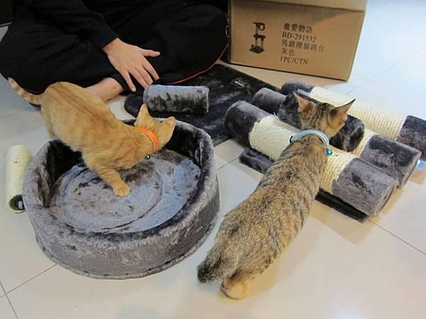 寵愛物語馬戲團貓咪跳台 愛貓園購入 (11)