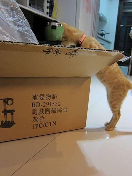 寵愛物語馬戲團貓咪跳台 愛貓園購入 (6)