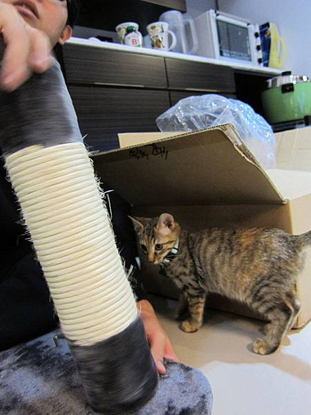 寵愛物語馬戲團貓咪跳台 愛貓園購入 (18)