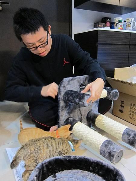 寵愛物語馬戲團貓咪跳台 愛貓園購入 (21)