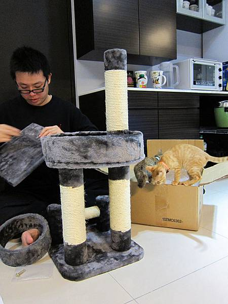 寵愛物語馬戲團貓咪跳台 愛貓園購入 (22)