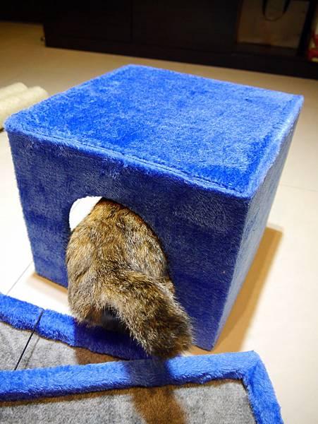 豪華貓爬架 貓跳台 貓窩 貓屋 貓吊床 貓玩具 (15)