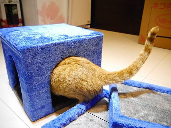 豪華貓爬架 貓跳台 貓窩 貓屋 貓吊床 貓玩具 (21)