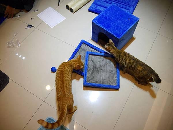 豪華貓爬架 貓跳台 貓窩 貓屋 貓吊床 貓玩具 (14)