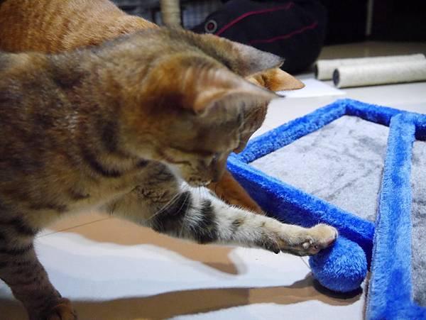 豪華貓爬架 貓跳台 貓窩 貓屋 貓吊床 貓玩具 (27)