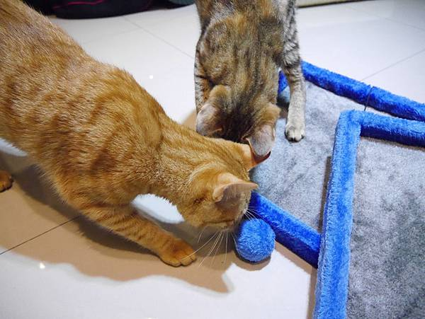 豪華貓爬架 貓跳台 貓窩 貓屋 貓吊床 貓玩具 (28)