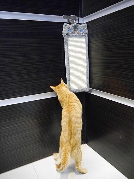 豪華貓爬架 貓跳台 貓窩 貓屋 貓吊床 貓玩具 (19)